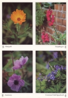 A Pack of 10 Flowers (Marigold, Snapdragon, Anemone, Common Field Speedwell) A4 Greetings Cards
