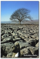 Yorkshire Dales (Limestone Pavement) A5 Greetings Cards