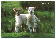 Bookends A5 Greetings Cards