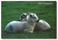 Two's Company A5 Greetings Cards