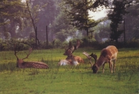 Deer Greetings Cards