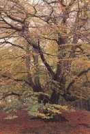 Oak Tree Greetings Cards