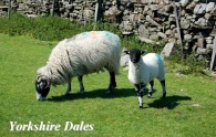 Yorkshire Dales Picture Magnets