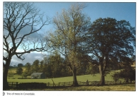 Trio of Trees in Coverdale postcards