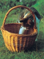 Cat & Basket VP Greetings Cards