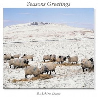 Yorkshire Dales Christmas Square Cards
