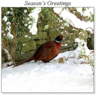 Pheasant in Winter Christmas Square Cards