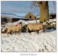 North York Moors Square Cards